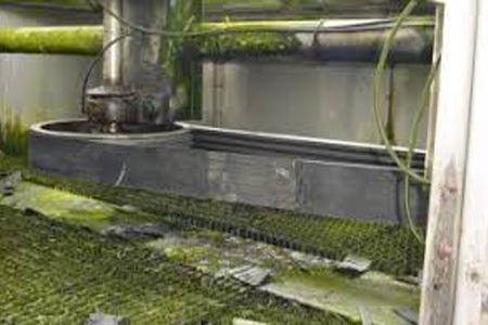 رشد جلبک در برج خنک کننده